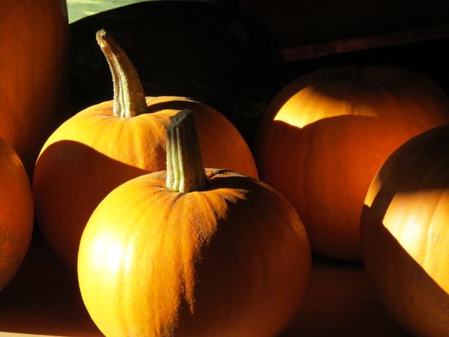 Llega el otoño y nuestra cocina se pone en marcha para aprovechar toda la frescura de la temporada